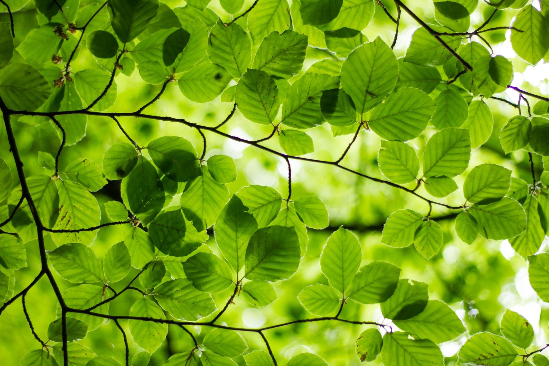 Green leaves symbolising spring